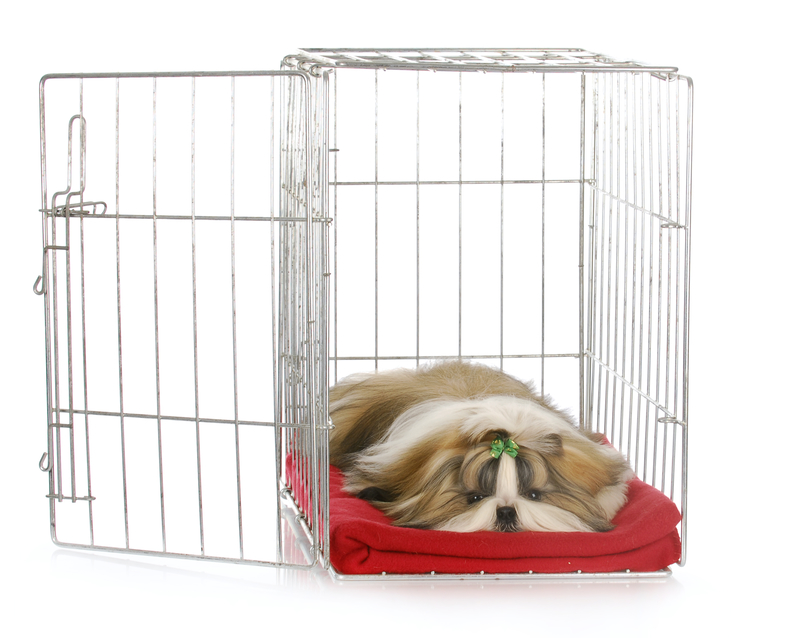 Shih tzu feeling at home in an open crate.