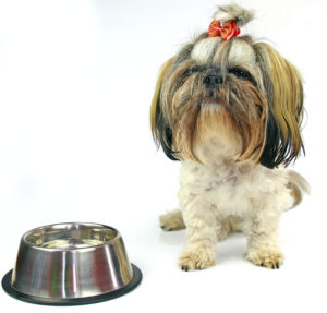 Best dog food for a shih tzu.