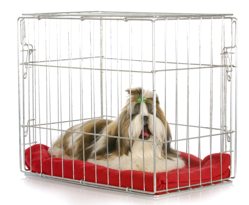 A shih tzu about to fall asleep in a crate.