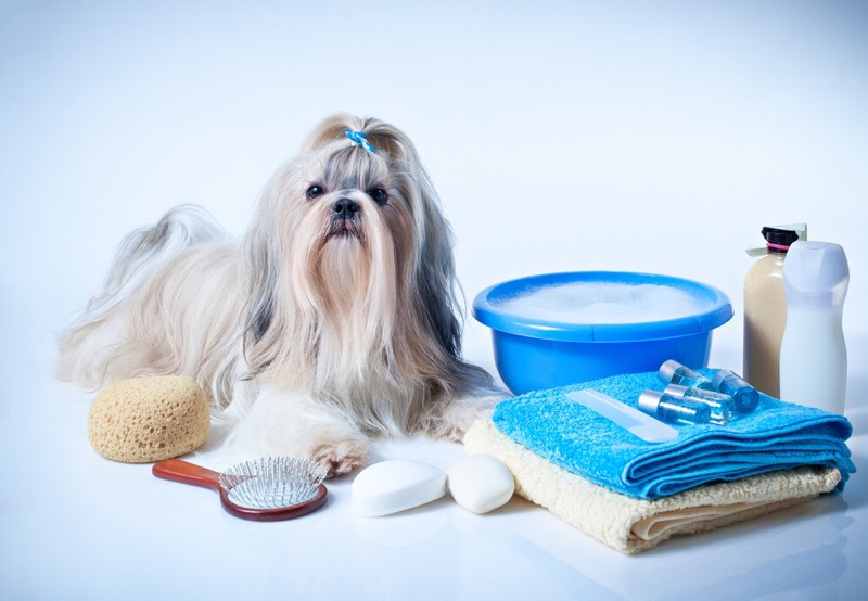 How to bathe a shih tzu dog.