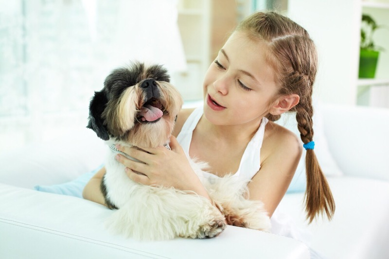 A child playing with a shih tzu.
