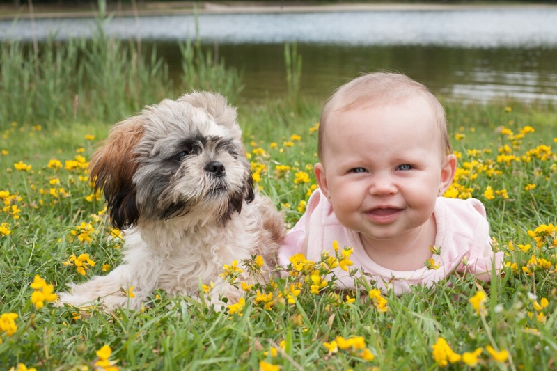A shih tzu puppy with a baby in a field.