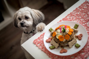Healthy home cooking for the shih tzu well being.