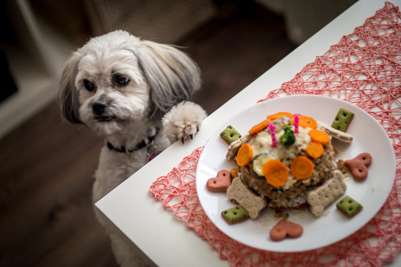 Healthy Home Cooking For The Shih Tzu Well Being