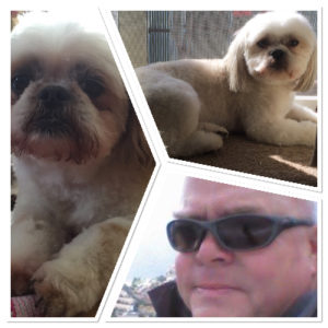 Bruno, Charlie and Shih Tzu Steve.