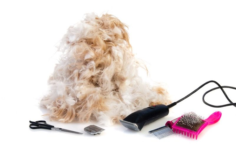 Shih Tzu Grooming Tools – Exactly What Do You Need?