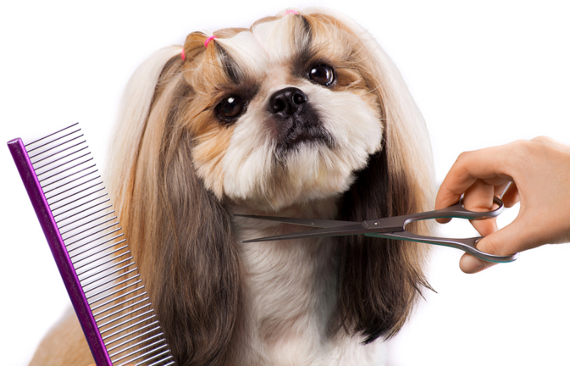 Types of shih tzu cuts.