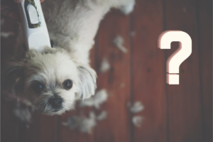 What are the best dog grooming clippers?