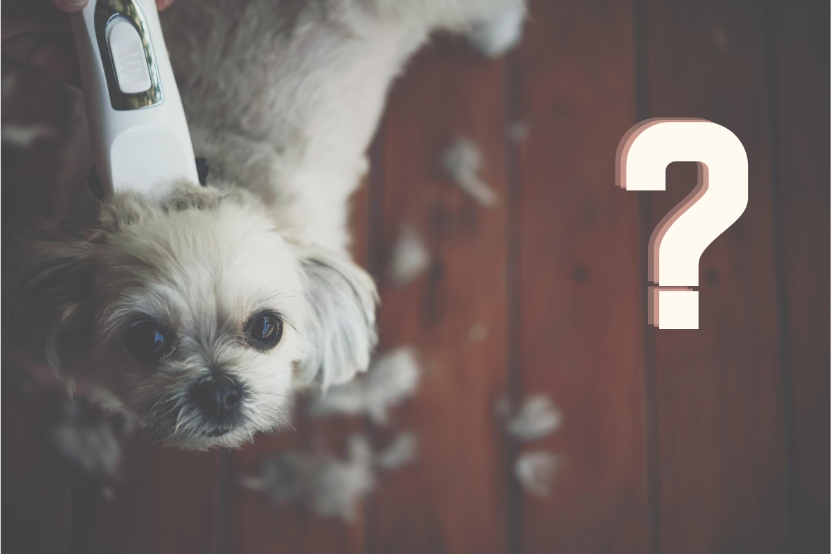 What Are The Best Professional Dog Grooming Clippers?