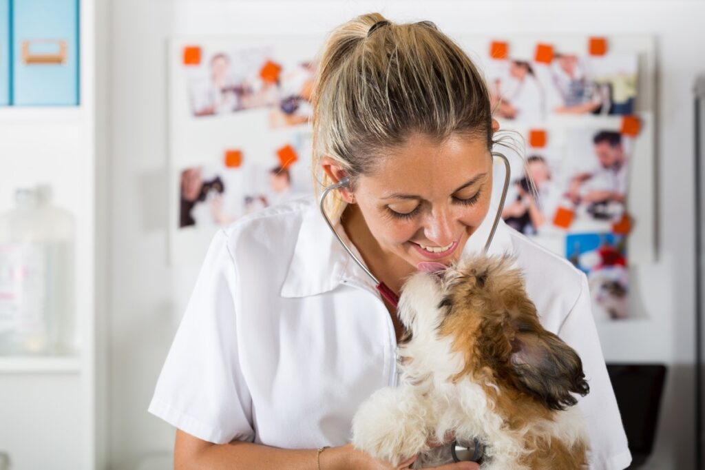 Have your vet give your senior shih tzu a health check every six months.