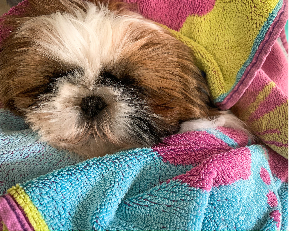 Make your shih tzu's bed as comfortable as possible.