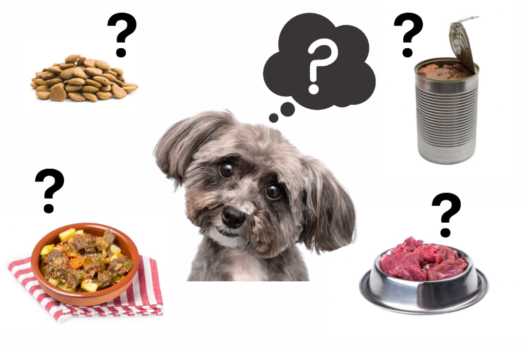 What is the best shih tzu food?