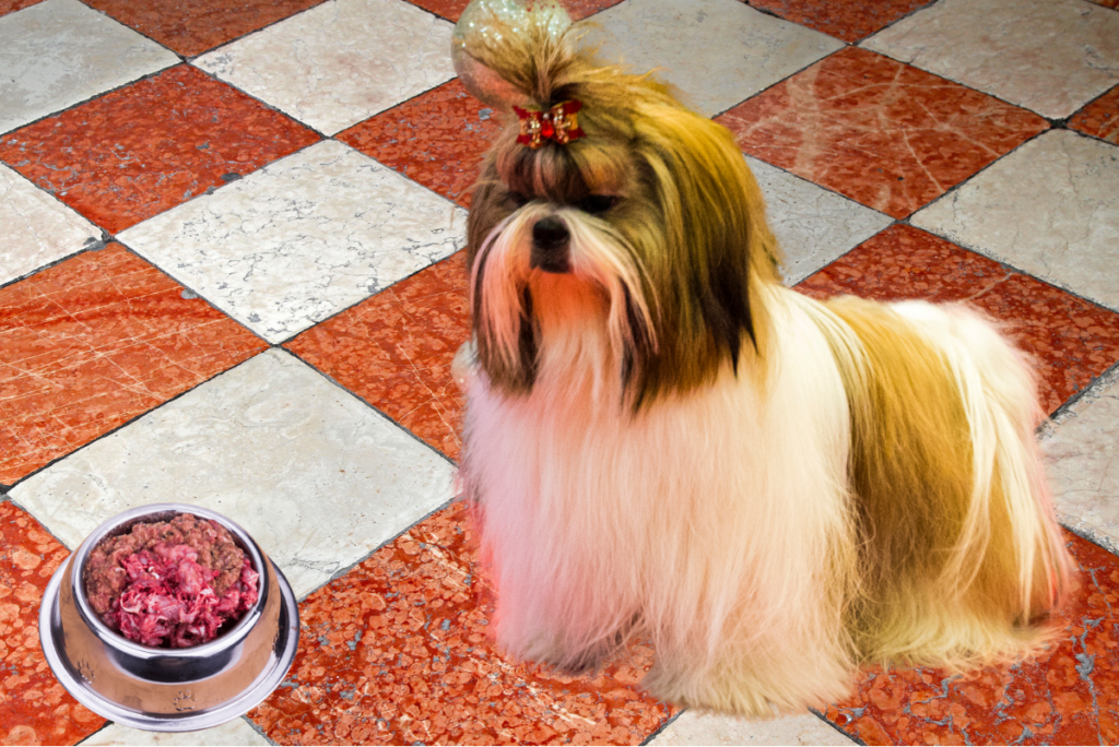 Summing up the best dog food for a shih tzu.