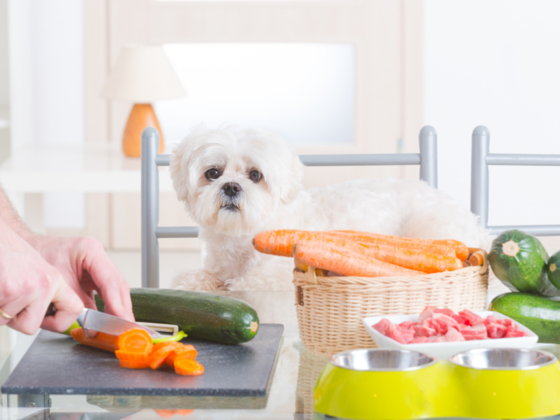Best Homemade Food For Shih Tzu Dogs
